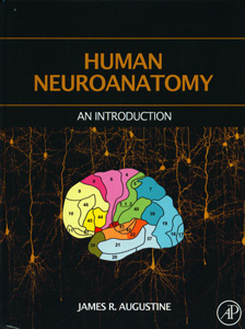 Human Neuroanatomy An Introduction